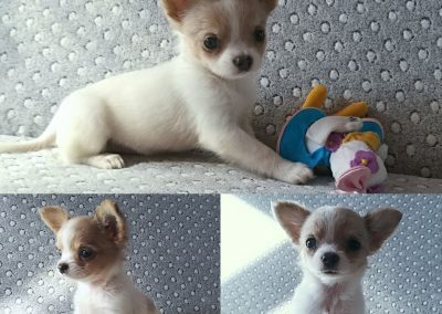 Gocha's Puppie