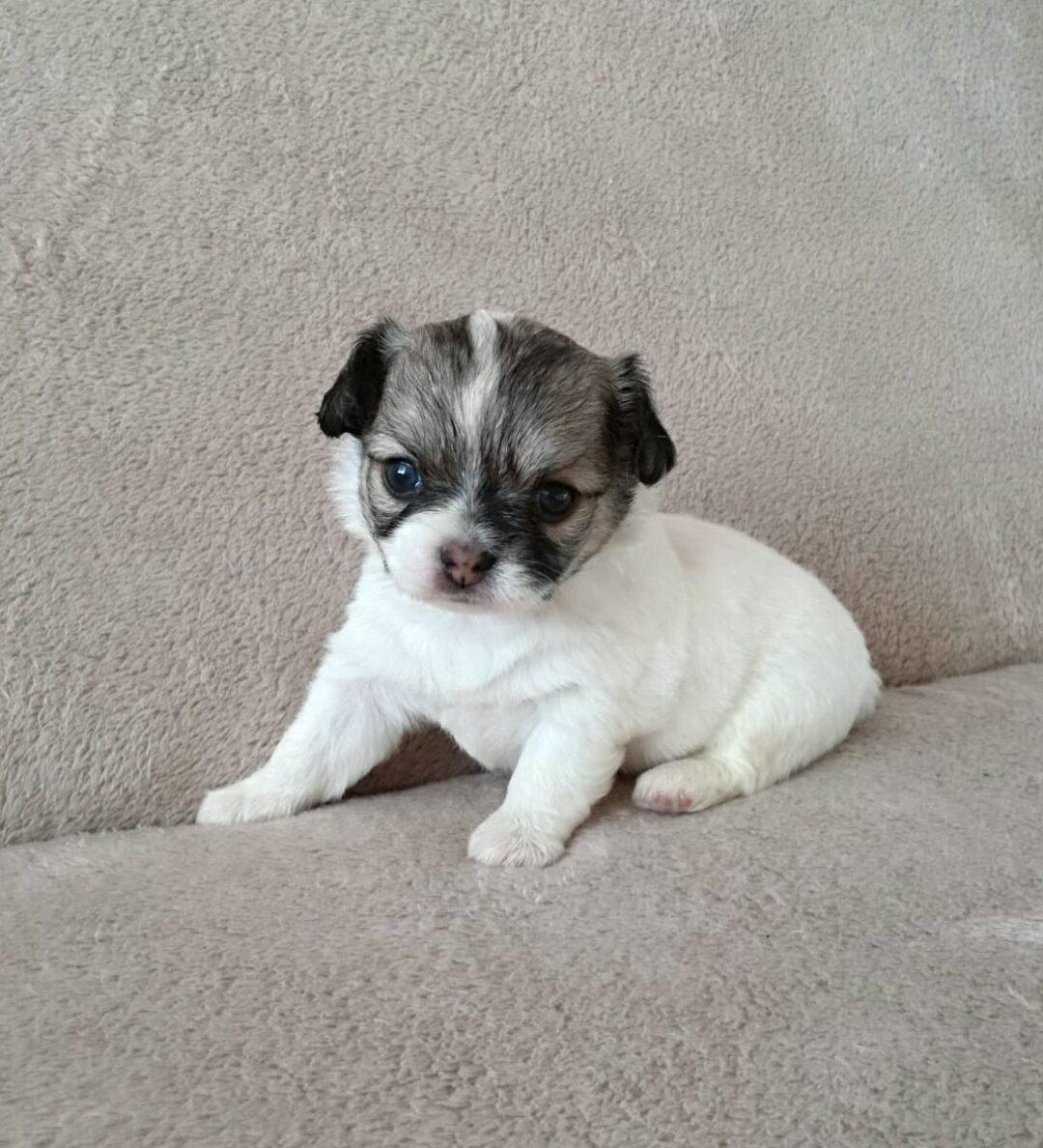 Puppie 4 new