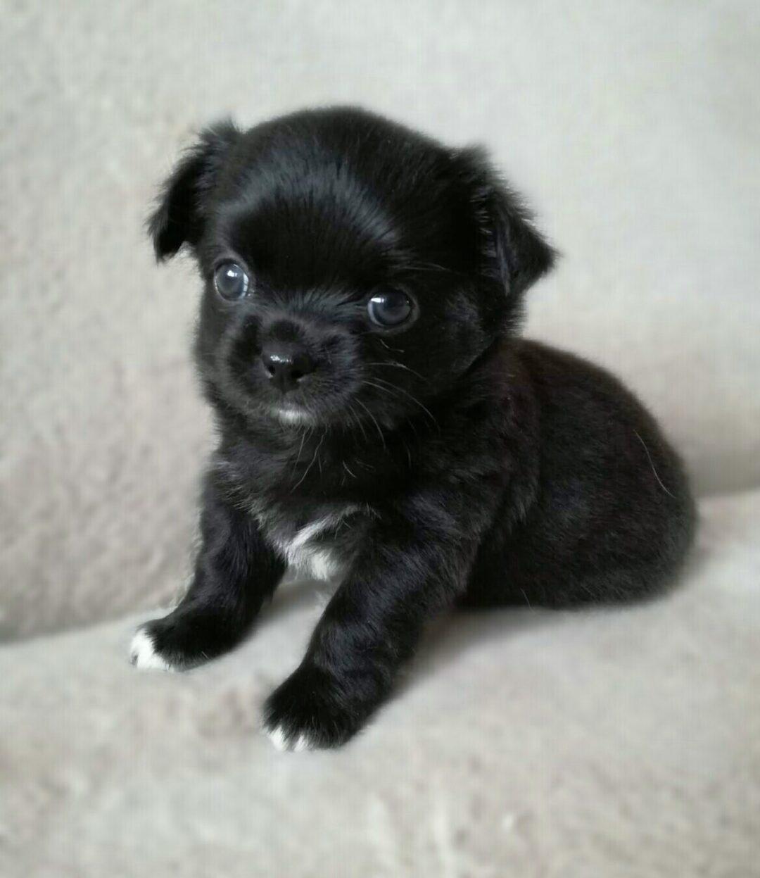 Puppie 5 new