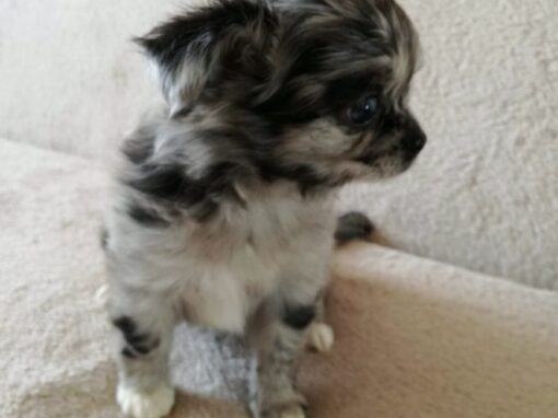 Puppie 6 new